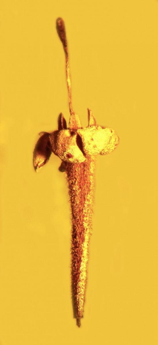 fiore nell'ambra (circa due milioni di anni fa)